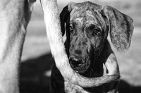 Tim_Heather_Dogs-B&W-11