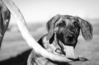 Tim_Heather_Dogs-B&W-12