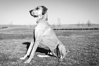 Tim_Heather_Dogs-B&W-13