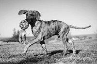 Tim_Heather_Dogs-B&W-7